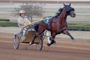 Как бегает лошадь: виды, скорость