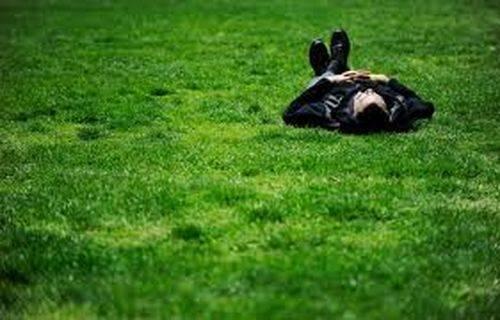 Уход за газоном по сезонам. весной, летом, осенью, зимой. фото — ботаничка.ru