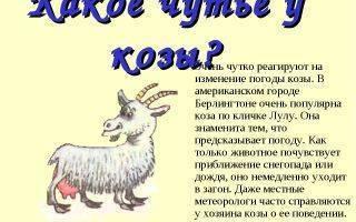 Как выбрать имя для козы: особенности прозвищ и список самых распространенных имён