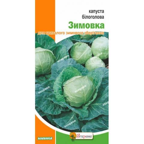 Капуста куизор f1: описание белокочанного сорта, фото и отзывы о выращивании