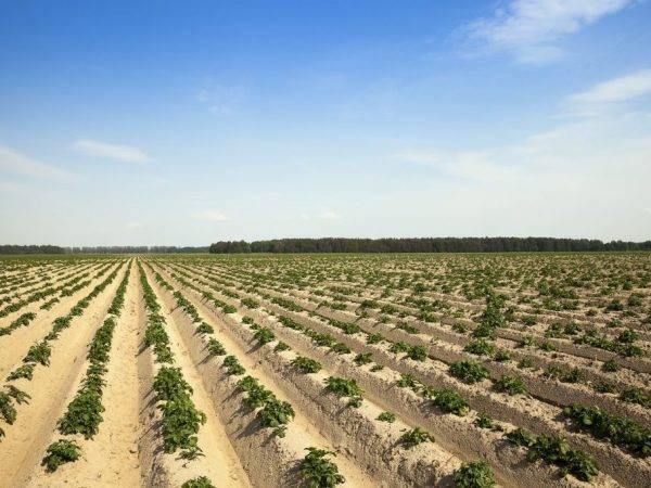Метод выращивания галины кизимы