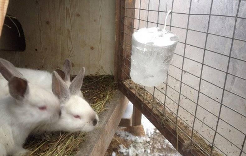 Содержание кроликов зимой: уход и чем кормить и поить