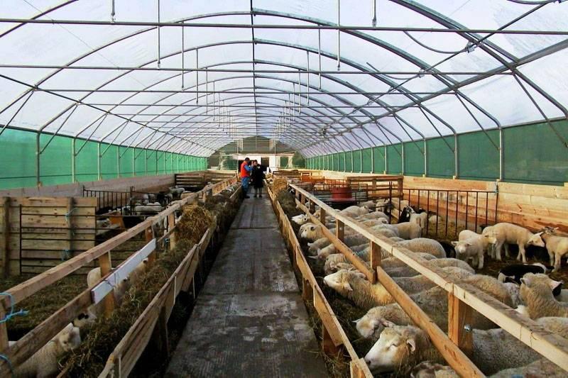 Как построить овчарню для овец: требования, этапы строительства