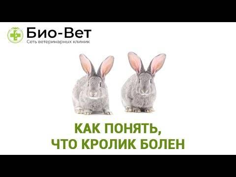 Правила вакцинации кроликов в домашних условиях и когда делать прививки