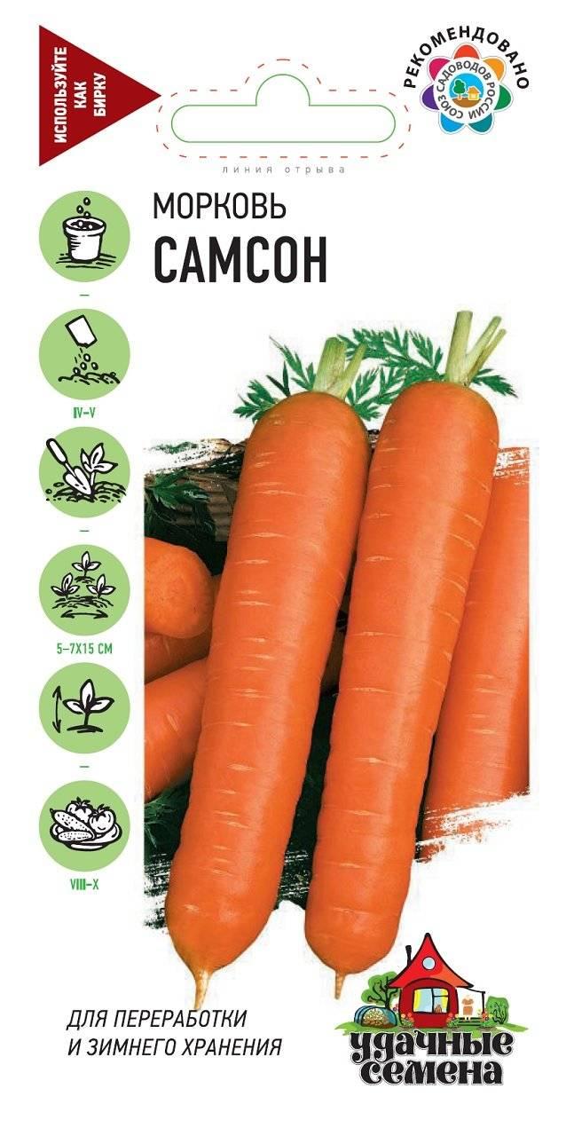 """Морковь """"самсон"""": описание, фото, отзывы"""