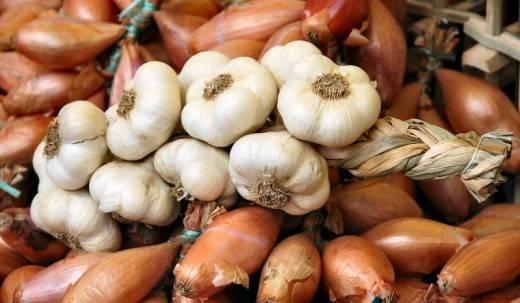 Как и нужно ли поливать чеснок в открытом грунте, когда прекращать