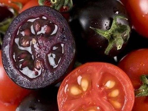 Выращивание помидоров в теплице зимой: можно ли это сделать и как выбрать сорт томатов, подготовить почву, получить крепкую рассаду и отличный урожай? русский фермер