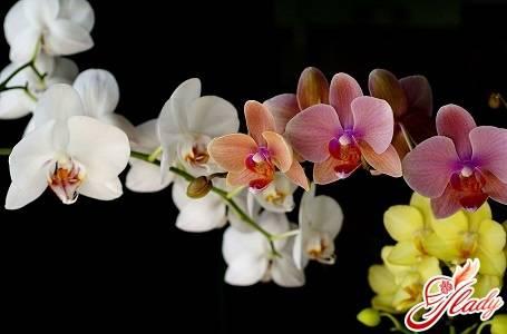 Болезни листьев и корней орхидей: фото, лечение заболеваний комнатных цветов и профилактические мероприятия