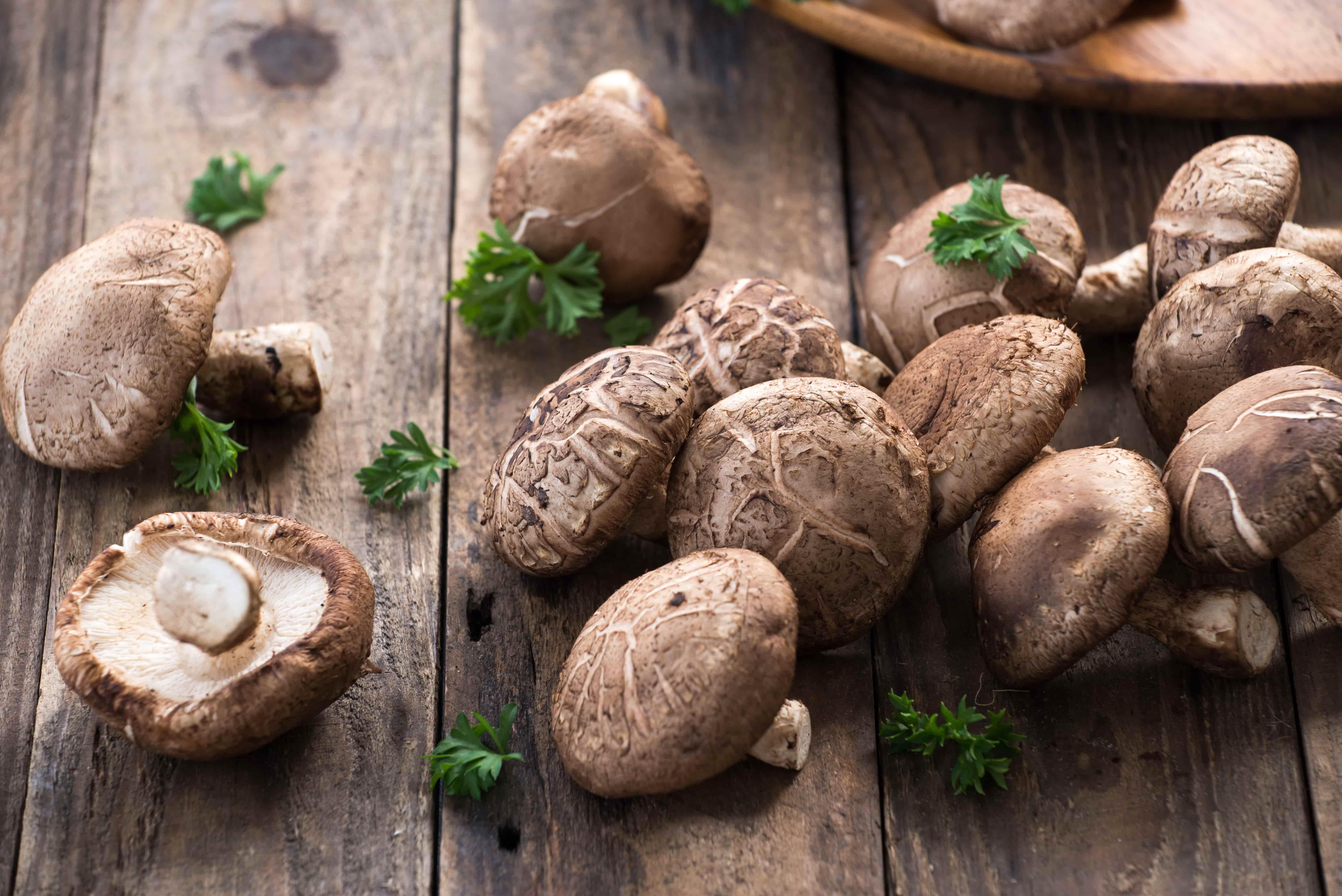 Описание и места распространения грибов мацутакэ