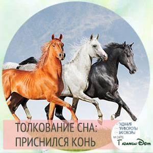 Лошадь жеребенком