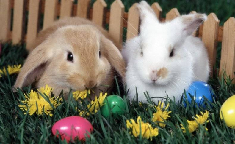 Можно ли кормить кроликов одуванчиками: листьями, цветками, корнями