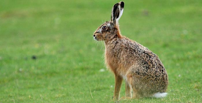 Что ест заяц в лесу для детей - лучший огород