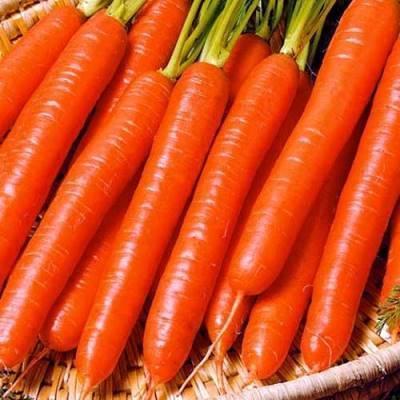 """Знаменитая морковь """"самсон"""" - описание сорта, фото, отзывы"""
