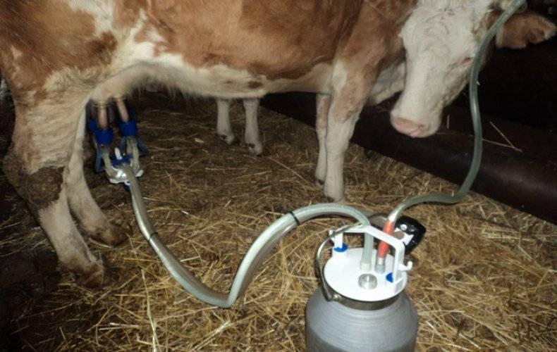 Размеры станка для доения коз смотреть видео. можно ли сделать станок для доения коз своими руками