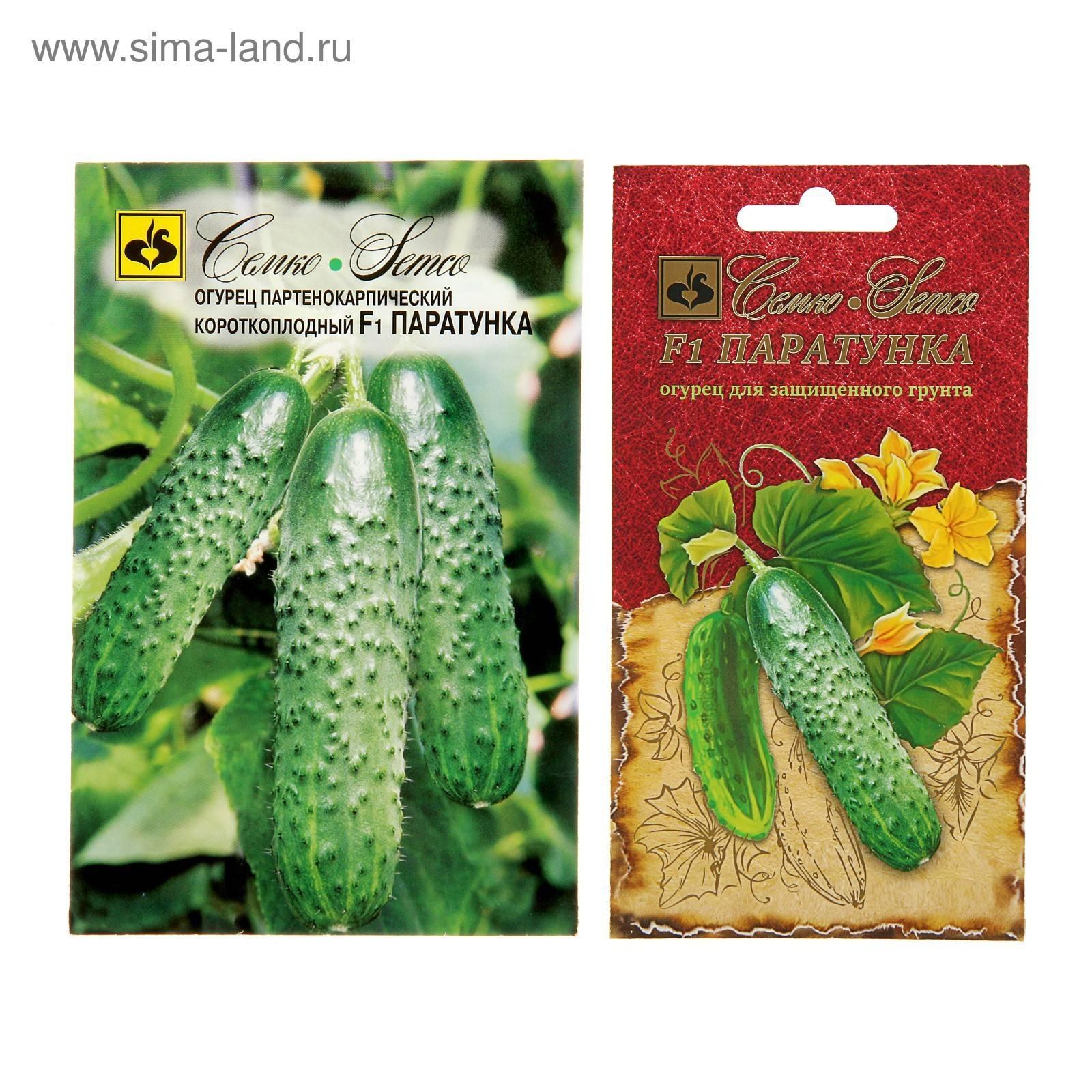 Описание сорта огурцов паратунка f1, особенности выращивания и урожайность