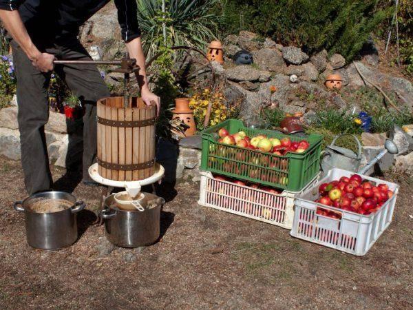 Дробилки для яблок своими руками из подручных материалов. самодельное оборудование для переработки фруктов и овощей :: syl.ru