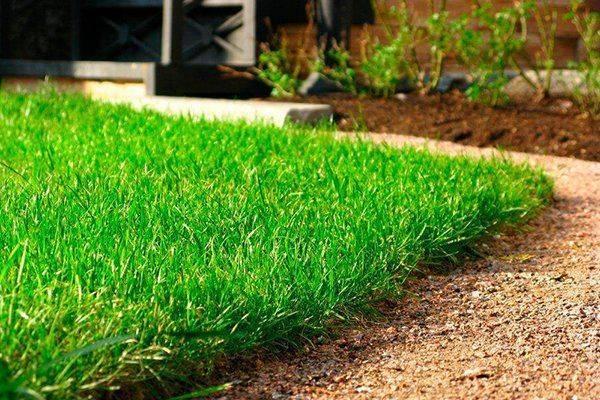 Как сажать газонную траву правильно и когда лучше ее сеять на участке