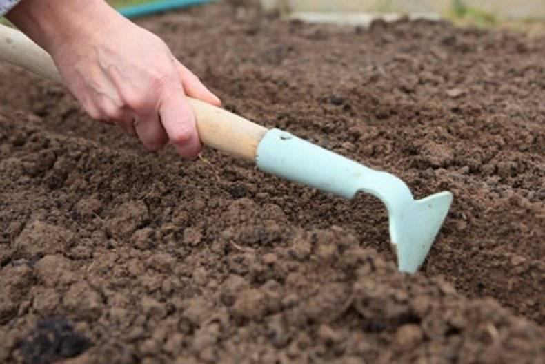 Посадка моркови семенами: при какой температуре, правильный, быстрый посев в открытый грунт, чтобы получить хороший урожай на грядке, удачные советы, лучшие хитрости русский фермер