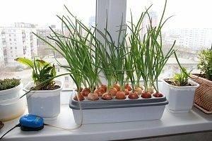 Гидропоника: в домашних условиях, оборудование и растворы