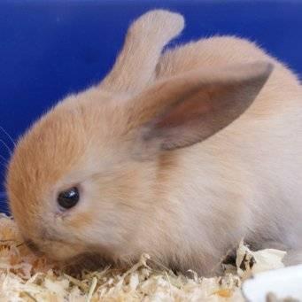 Почему кусают кролики: как отучить