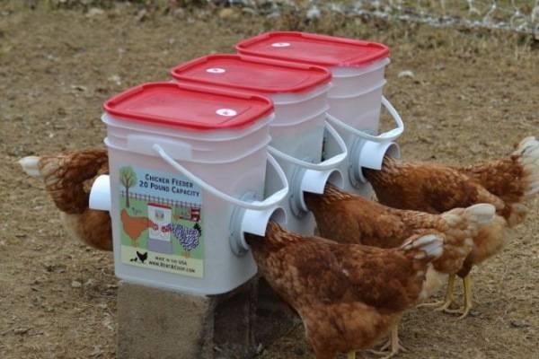 Кормушки для кур из пластиковых канализационных труб