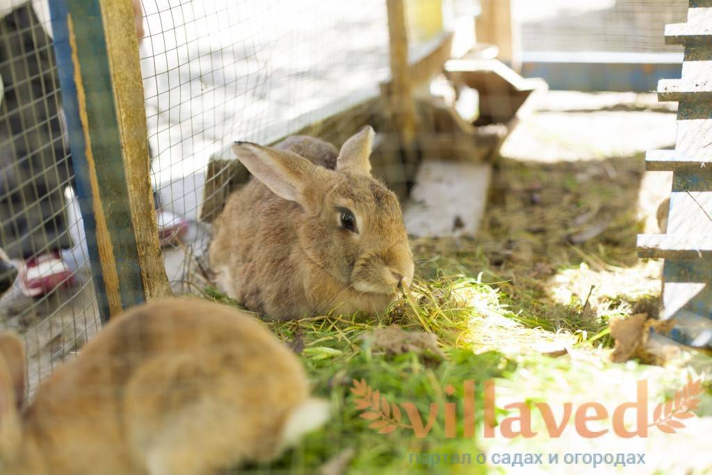 Содержание кроликов: подробная инструкция по разведению и уходу за кроликами (видео + фото)