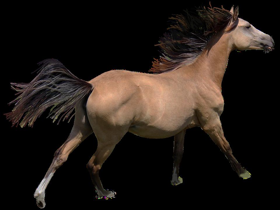 Галоп лошади: виды, средняя скорость, как правильно ездить и остановить лошадь в галопе, фото, видео - сад и дача