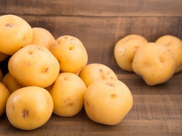 Сорт картофеля зекура: подробное описание, условия выращивания и фото русский фермер