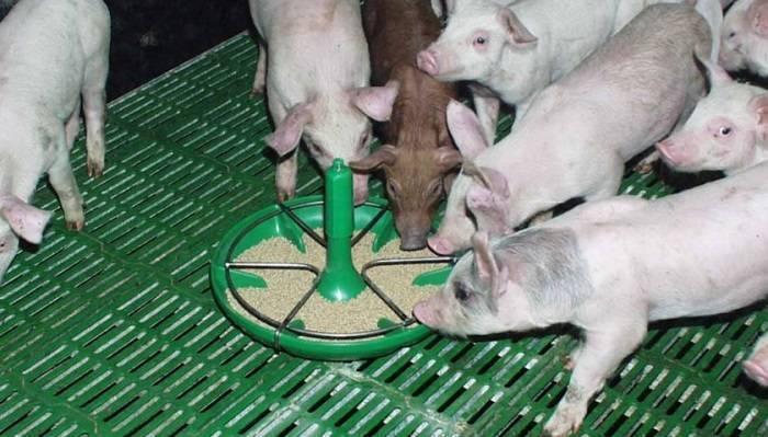Поилки для свиней: особенности, виды и правила установки