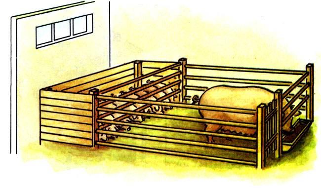 Станок для опороса свиноматки — критерии выбора + изготовление клетки своими руками