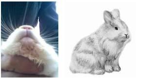 Лечение мокреца у кроликов народными средствами и препаратами, симптомы