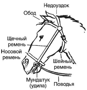 Недоуздок и уздечка для лошади: что это, строение, как сделать своими руками
