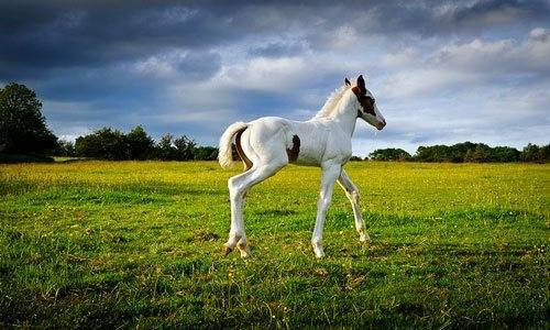 К чему снится лошади?
