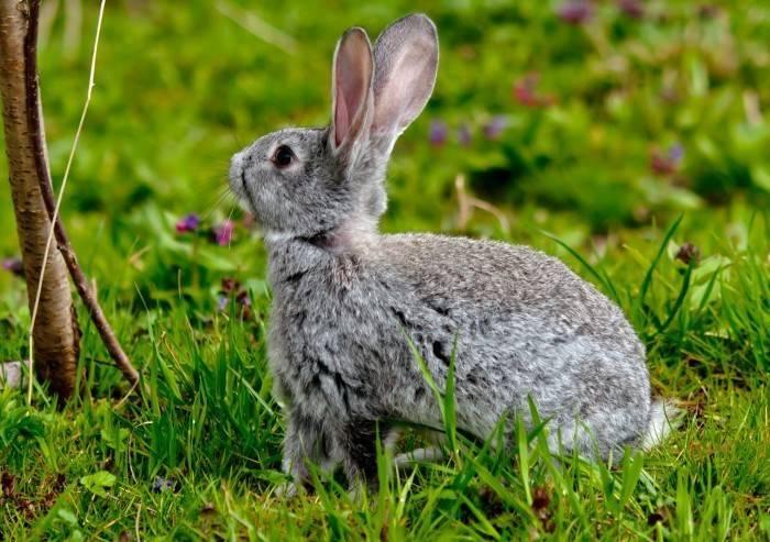 Можно ли давать кроликам крапиву: рекомендации по правильному кормлению