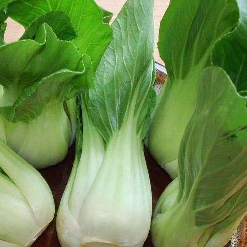 Бок-чой: описание китайской листовой капусты, лечебные свойства, в народной медицине, противопоказания