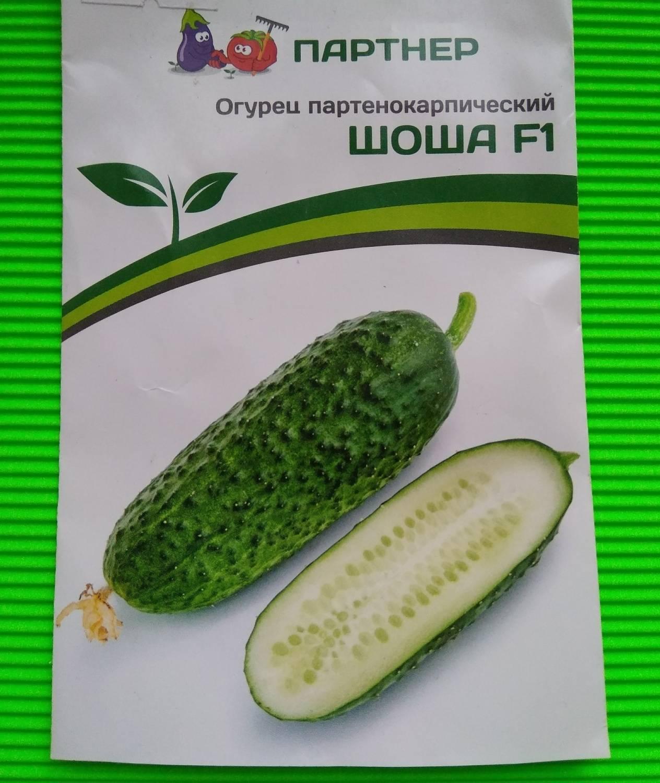 Огурец марьина роща f1 — описание и характеристика сорта | zdavnews.ru