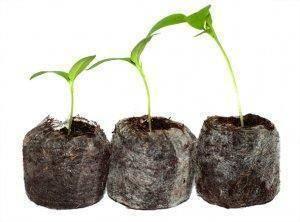 Стоит ли сажать семена перцев и томатов в торфяные таблетки? / асиенда.ру