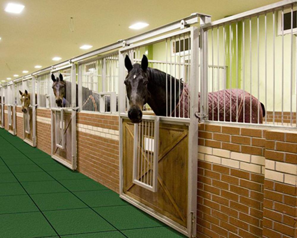Устройство конюшни: правила содержания лошадей