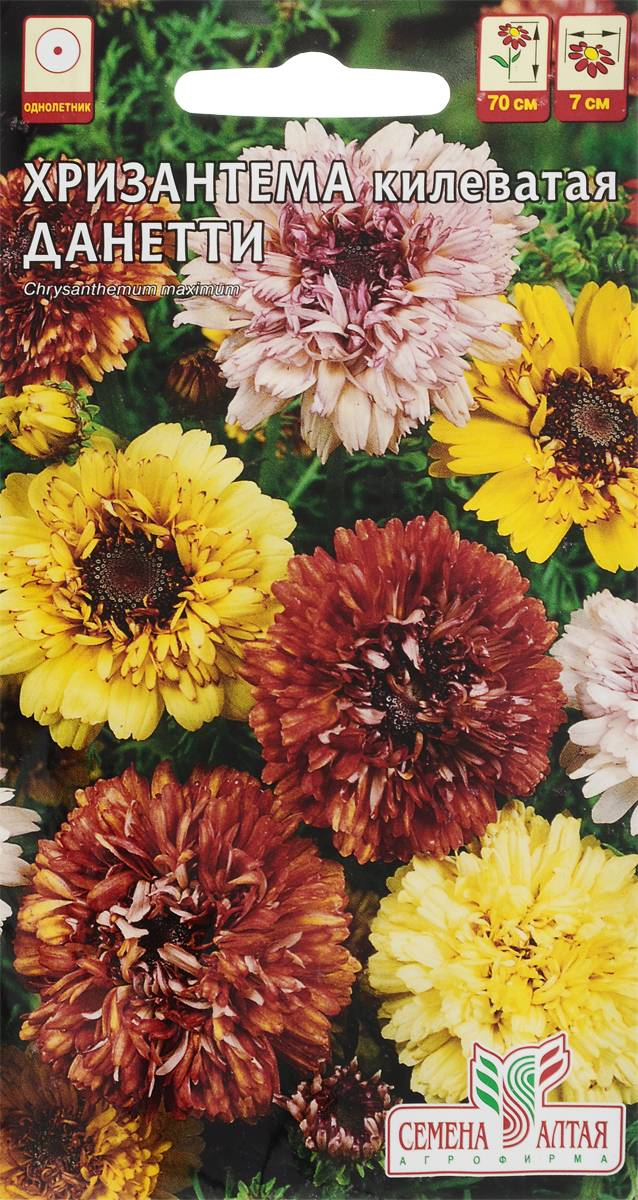 Хризантема килеватая: выращивание из семян, фото