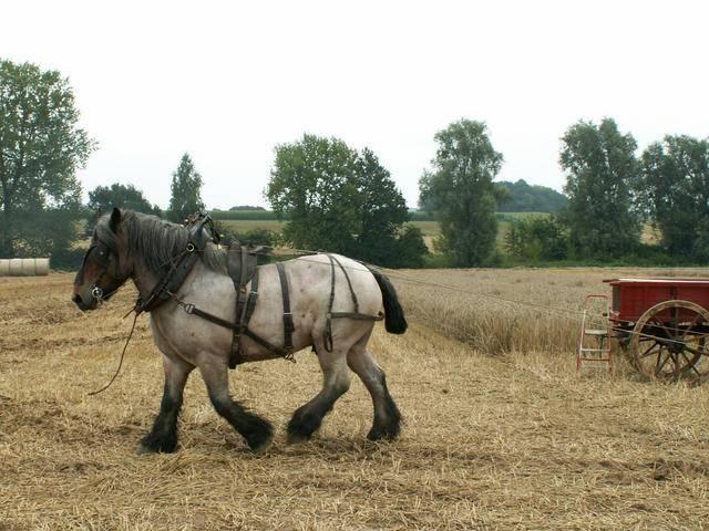 Породы лошадей с фото и описанием | продвижение сайтов в яндекс