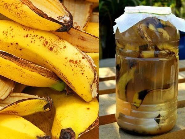 Банановая кожура для комнатных растений (19 фото): рецепт приготовления удобрения для цветов. как применять подкормку?