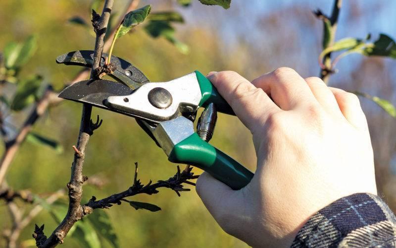 Обрезка яблонь осенью и весной схема