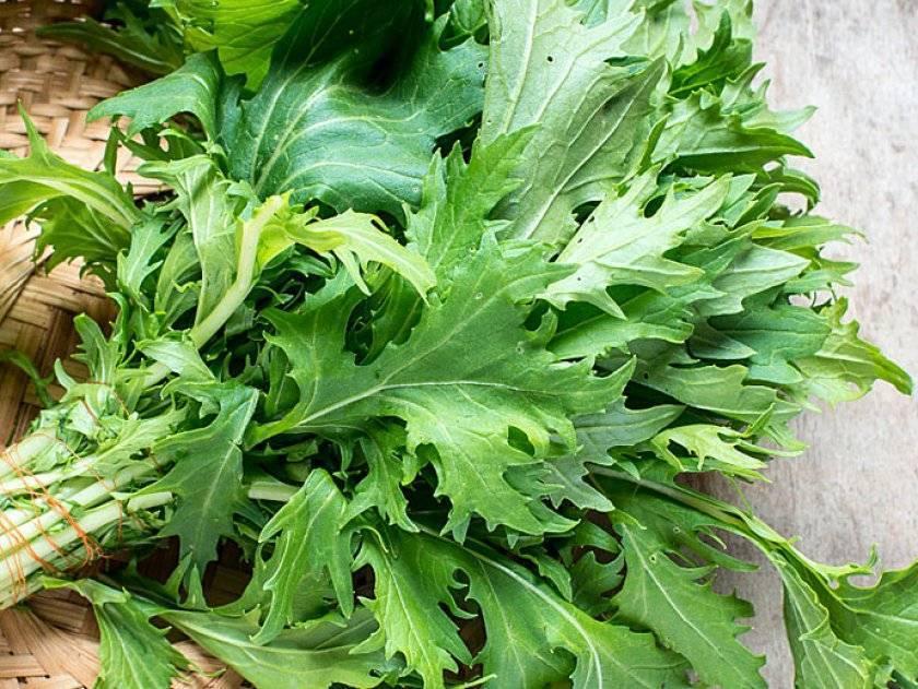Японская капуста мизуна: сорта, отзывы, фото, урожайность
