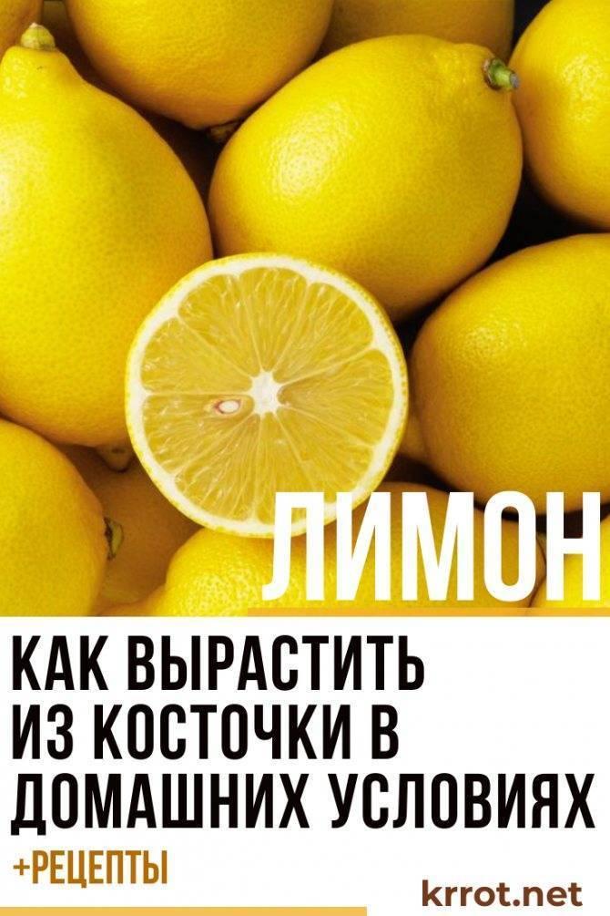 Выращивание Новозеландского лимона