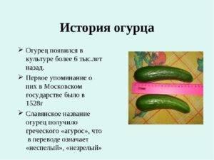 Огурец интересные факты, интересные рецепты