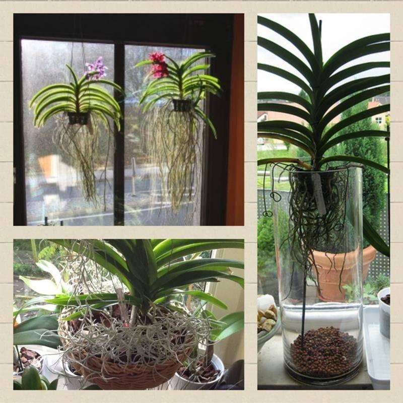 Как правильно поливать орхидею в домашних условиях: пошаговое фото и видео о том, как надо купать и как лучше ухаживать за комнатным растением после покупки