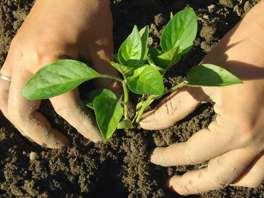 Надо ли окучивать огурцы | вырасти сад!