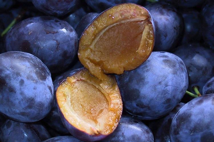 ✅ о сливе яичная синяя: описание сорта, особенности опыления, агротехника выращивания - tehnomir32.ru