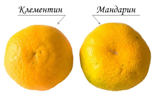 Клементин: состав, калорийность, польза, рецепты
