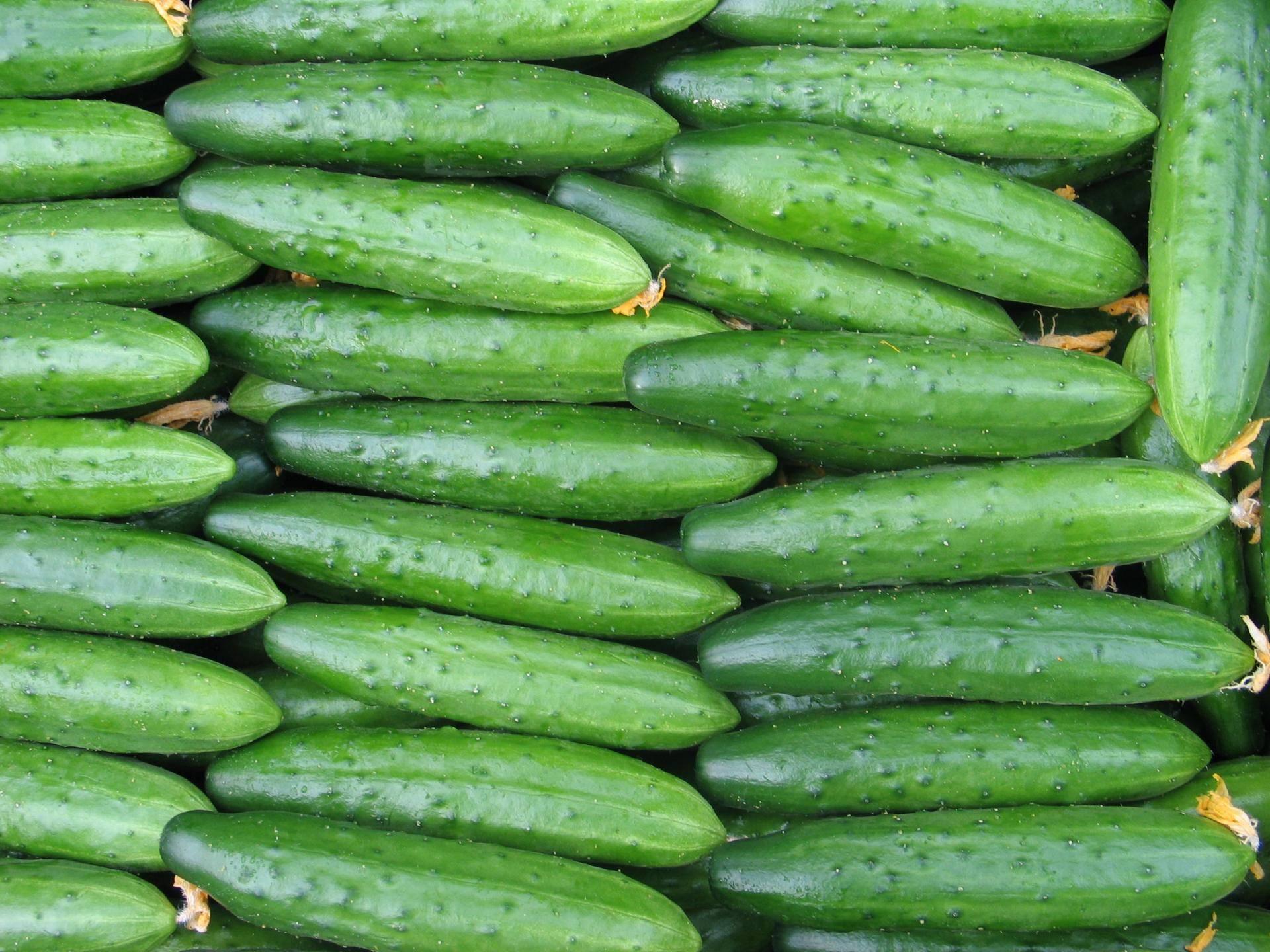 """Огурец """"зозуля"""": описание сорта и агротехника выращивания"""
